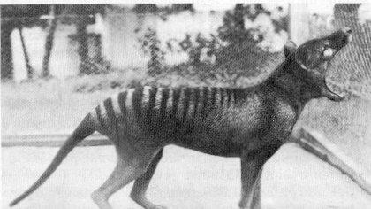 Wolf02